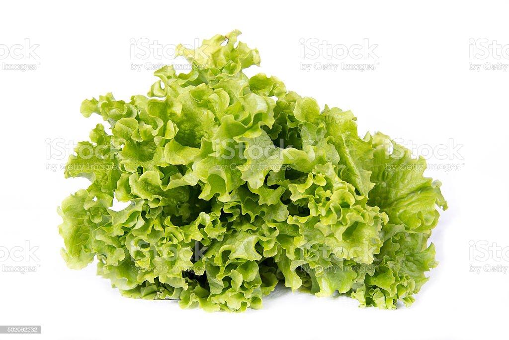 Salade isolé sur blanc - Photo