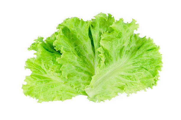 salad leaf. lettuce isolated on white background. - lettuce stock photos and pictures
