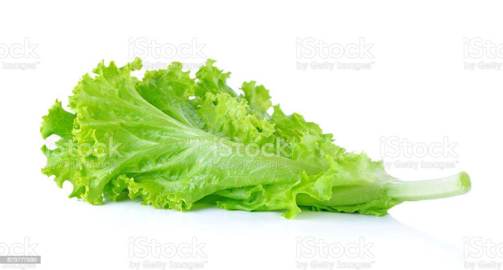 Salata yaprağı. Beyaz arka plan üzerinde izole marul royalty-free stock photo