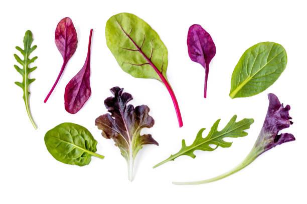 샐러드 잎 컬렉션입니다. 고립 된 혼합 샐러드 잎 시금치, chard, 양상추, 흰색 바탕에 루꼴라. 플랫 레이 - 아루굴라 뉴스 사진 이미지