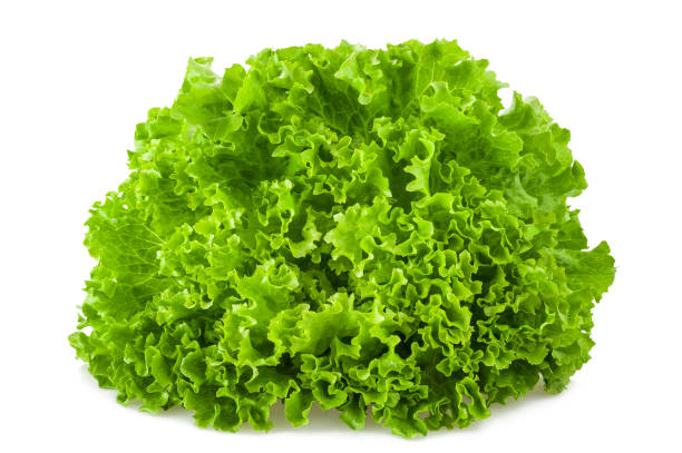 salad Frisee salad isolated on white background butterhead lettuce stock pictures, royalty-free photos & images