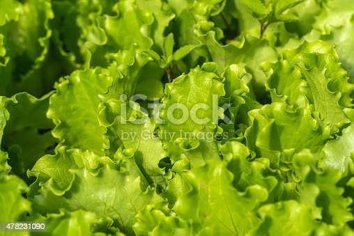 istock salad vegetables plant background 478231090