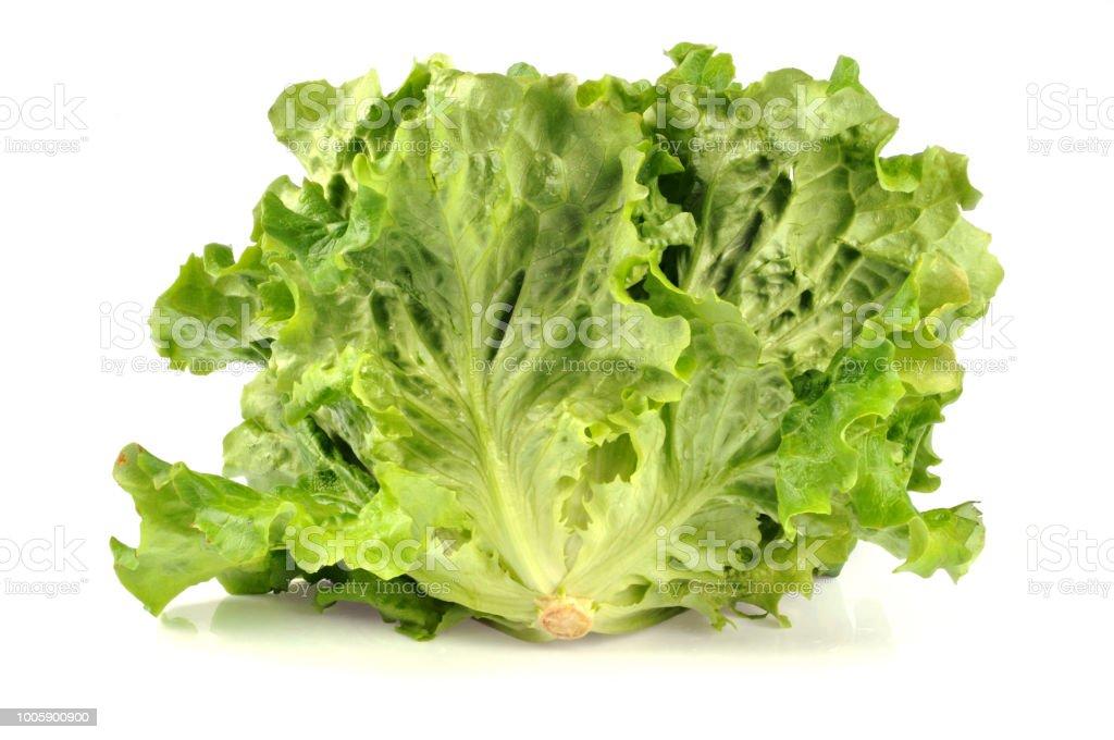 Salade batavia - Photo
