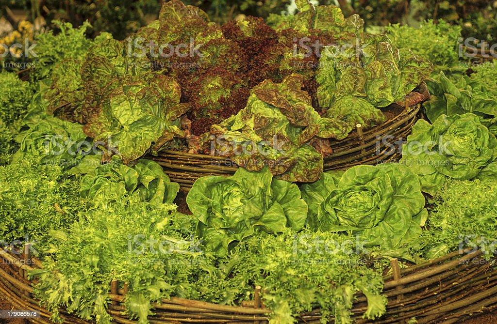 salades royalty-free stock photo
