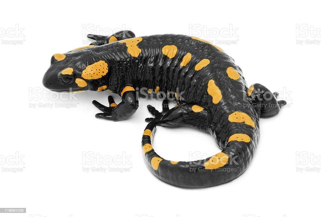 Fotografía de Salamandra y más banco de imágenes de Amarillo - Color ...