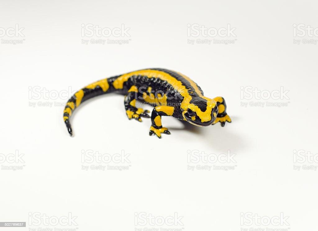 Fotografía de Salamandra Salamandra y más banco de imágenes de Aire ...