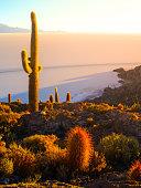 Salar de Uyuni salt plains with large cactuses of island Incahuasi at sunrise time, Andean Altiplano, Bolivia, South America.