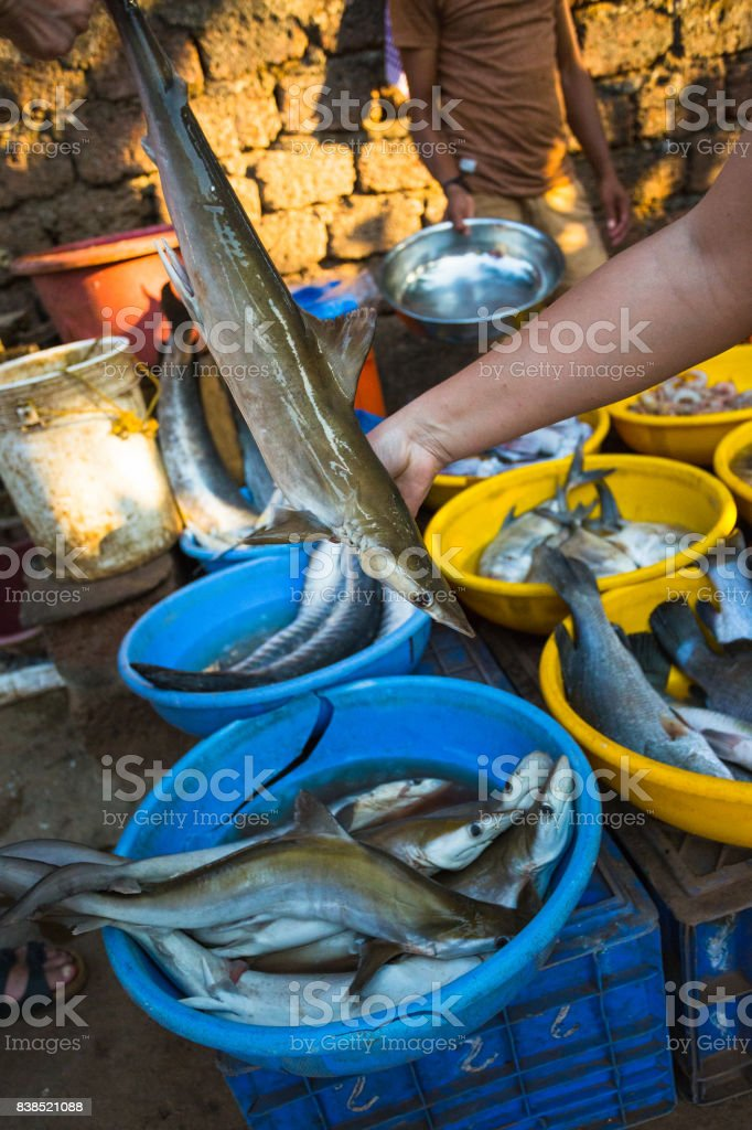 Sale of sharks in the markets of different cities of Goa stock photo
