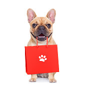 istock sale shopping dog 1017046150