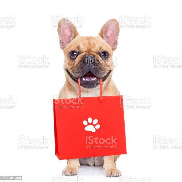 Sale shopping dog picture id1017046150?b=1&k=6&m=1017046150&s=612x612&h=aw8xwaw1 ozwhofa nr7k44oniefsh6gvv9i rupi3k=