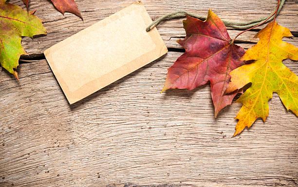 sale tag with maple leaves - sale stok fotoğraflar ve resimler