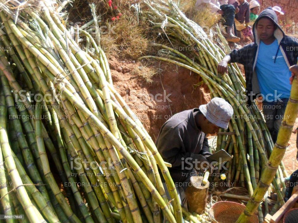 A salesman carving sugar cane stock photo