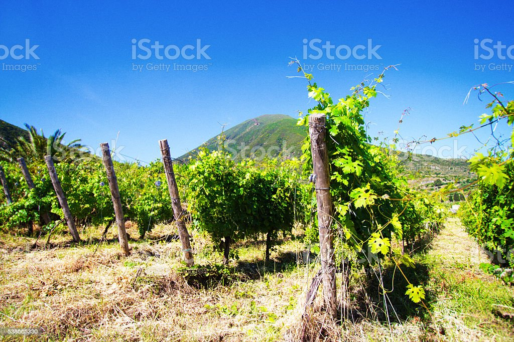 Salina, Sicily: Vineyard, Green Volcano, Deep Blue Sky stock photo