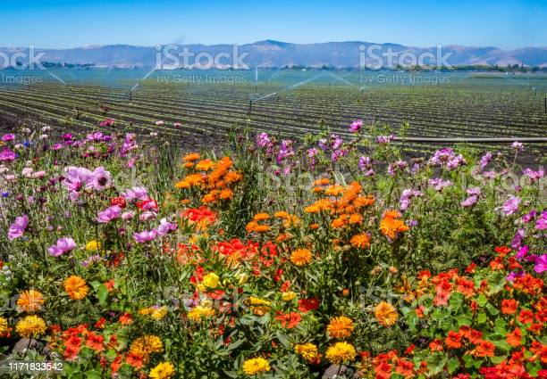 Salinas Valley California Stock Photo - Download Image Now