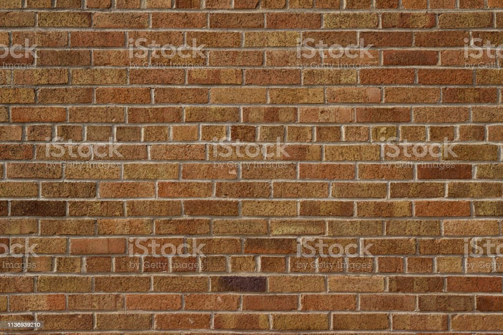 This image shows an older brick wall background with American common...