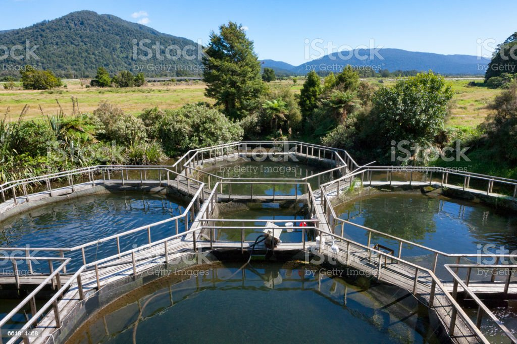 Salmon Aquaculture in rural New Zealand stock photo