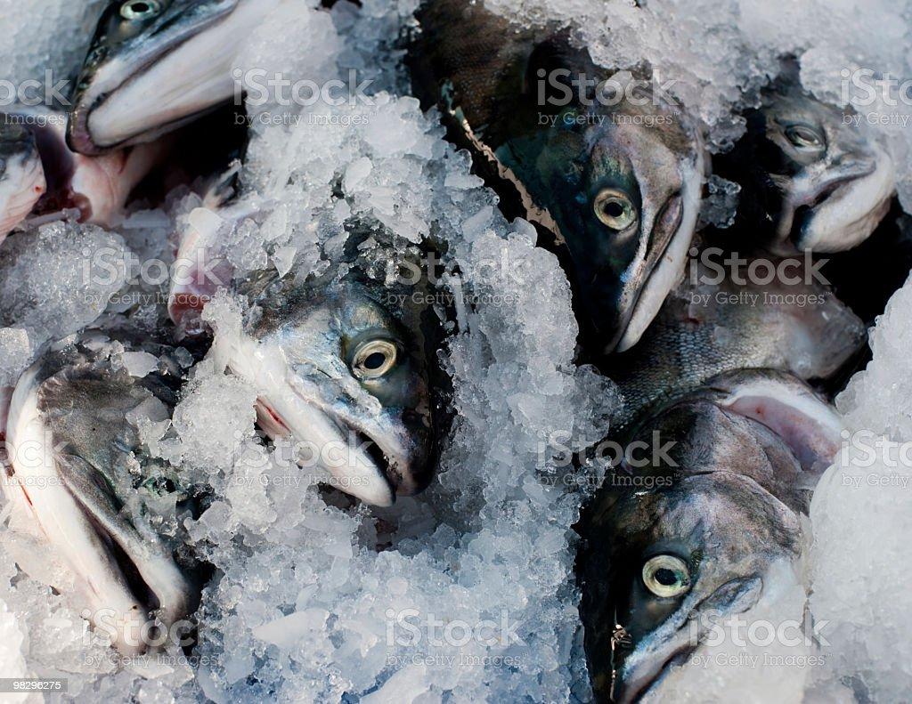 연어색 (Fish Market royalty-free 스톡 사진