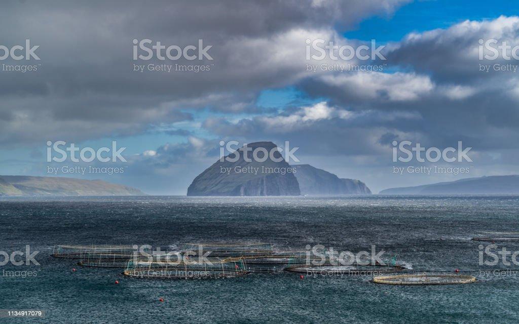 Salmon breeding in Faroe Islands стоковое фото