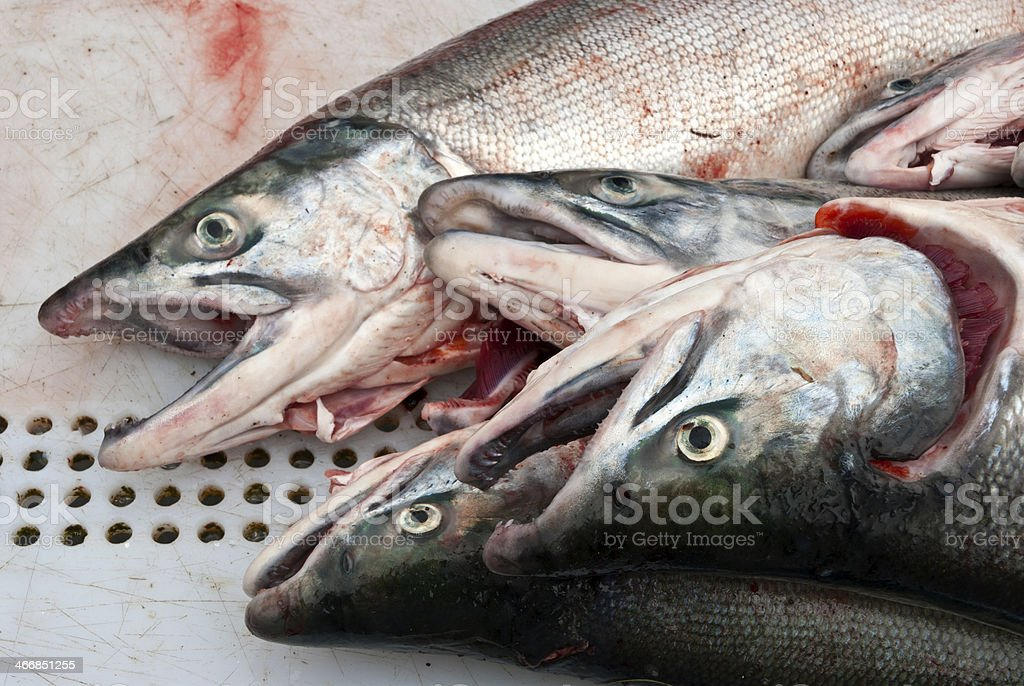 Salmon cleaning stock photo
