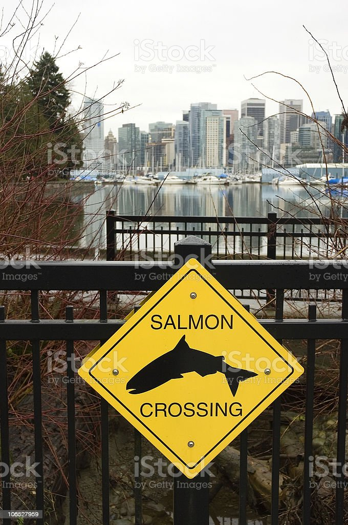 Salmon crossing sign in Stanly Park, Vancouver, British Columbia stock photo