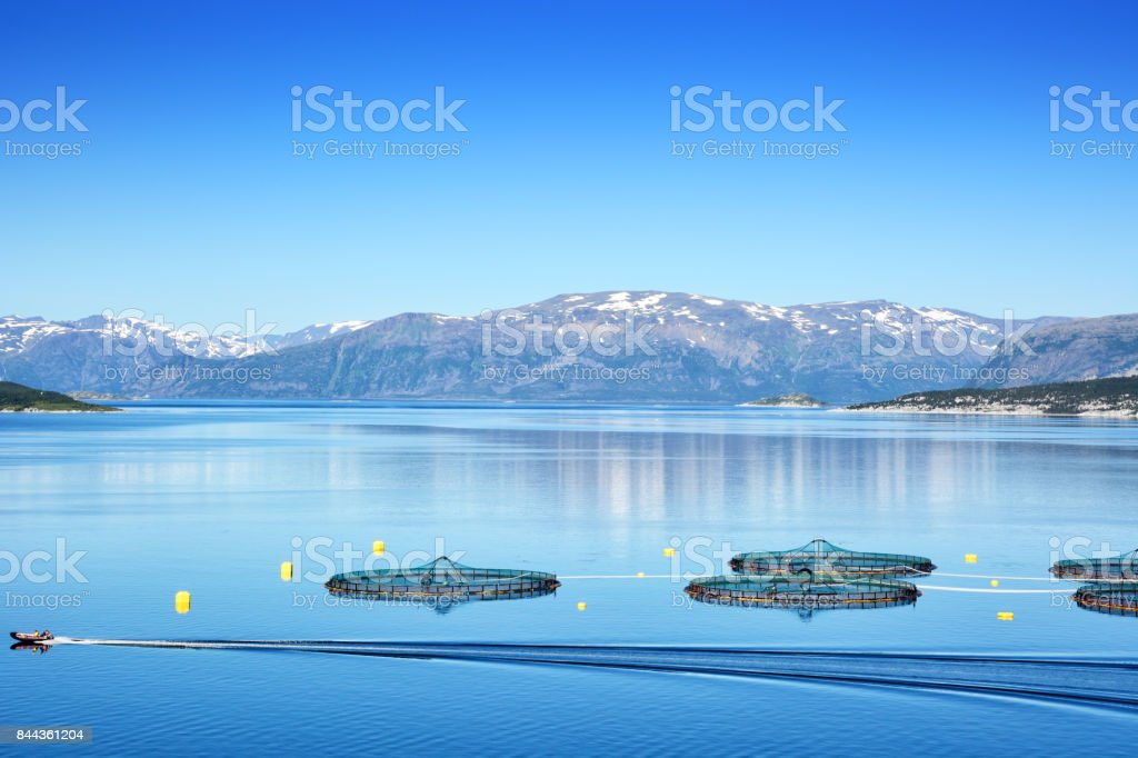 Salmonicultures, Norvège - Photo