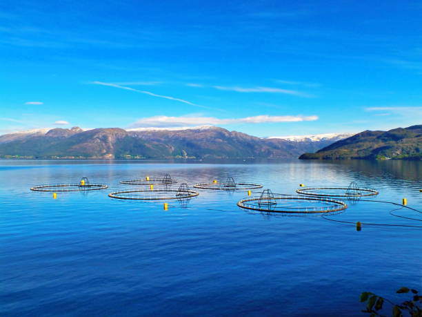 salmon farm - aquaculture stock pictures, royalty-free photos & images
