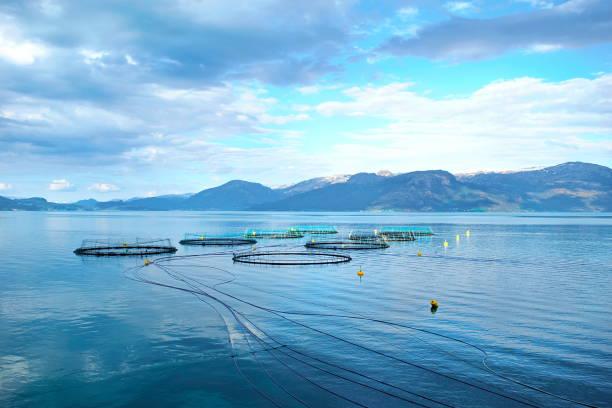 salmon farm - aquacultura imagens e fotografias de stock