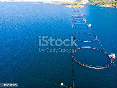istock Salmon farming, fish farm in the sea 1165416400