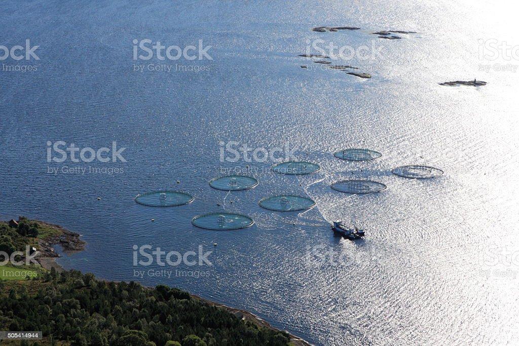 La piscicultura del salmón - foto de stock