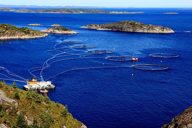 Salmon farming stock photo
