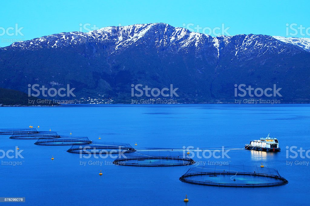 Salmon fish farm at night, Norway stock photo