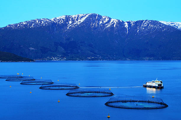 salmon fish farm at night, norway - aquaculture stock pictures, royalty-free photos & images