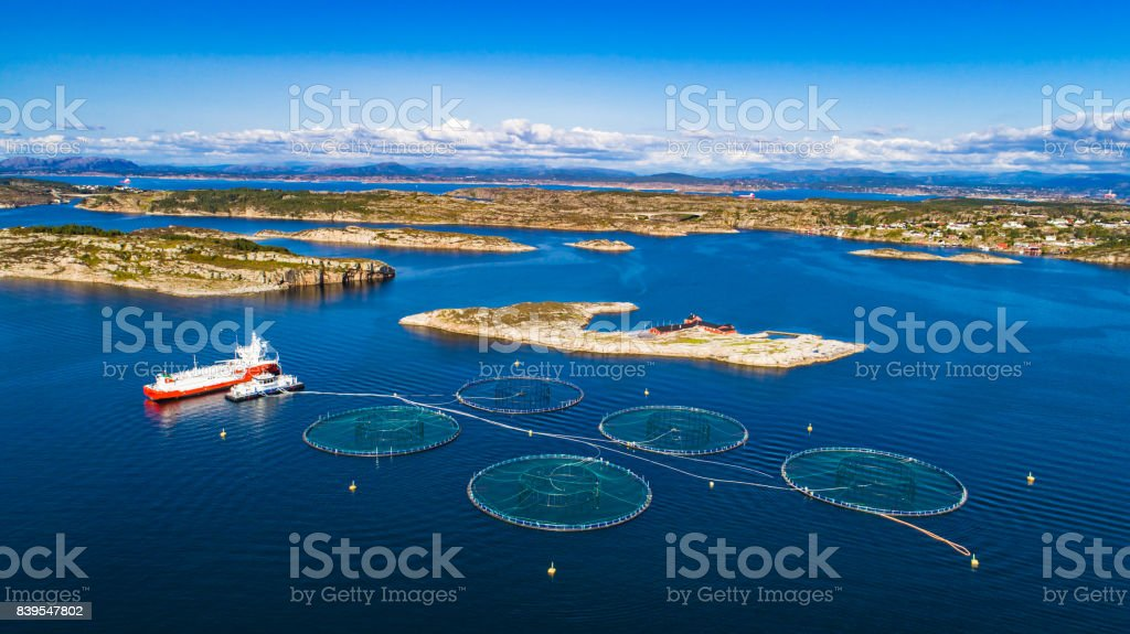 Salmon fish farm. Bergen, Norway. - Royalty-free Agriculture Stock Photo