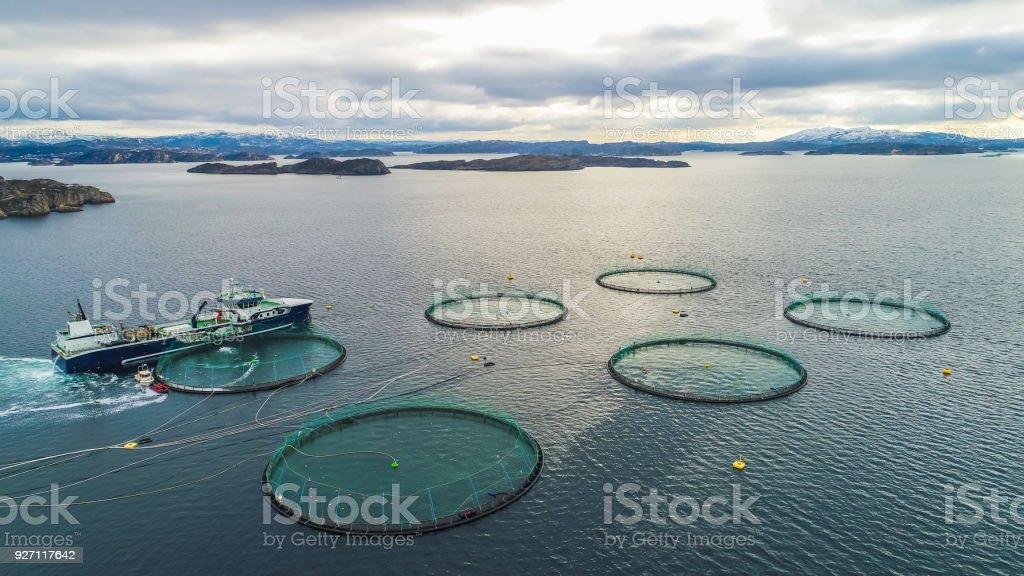 Salmon fish farm. Bergen, Norway. royalty-free stock photo