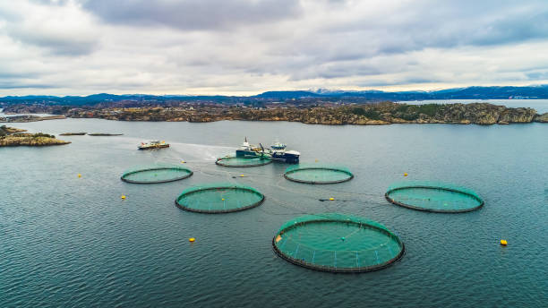 salmon fish farm. bergen, norway. - aquaculture stock pictures, royalty-free photos & images