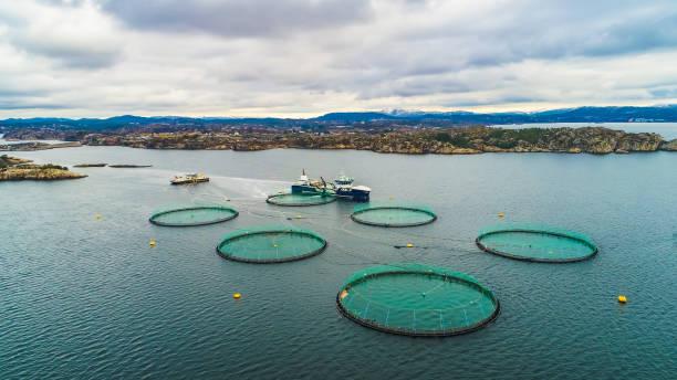 Salmon fish farm. Bergen, Norway. Salmon fish farm. Bergen, Norway. salmonidae stock pictures, royalty-free photos & images