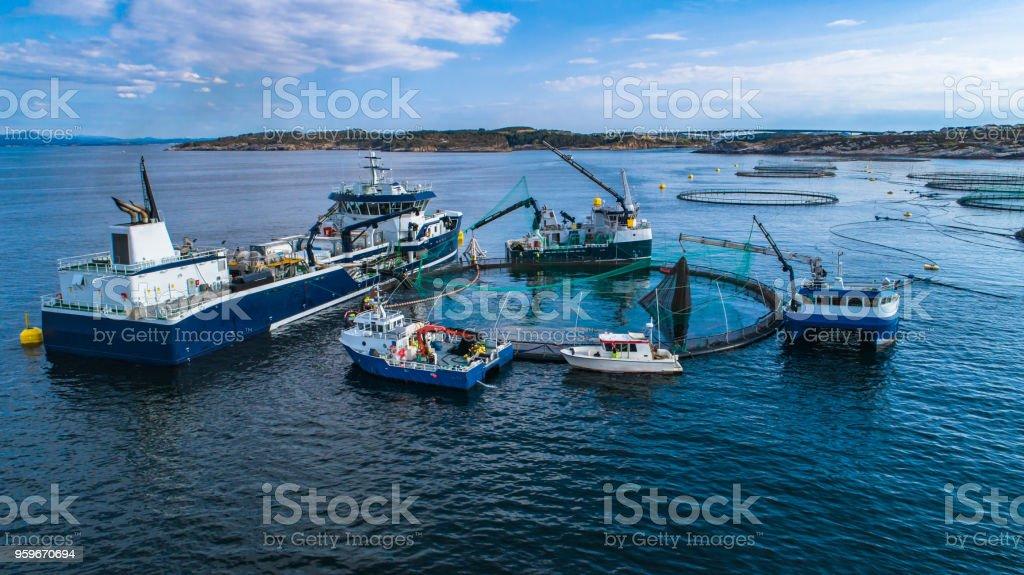 Salmon fish farm in fjord. Norway, Bergen. royalty-free stock photo