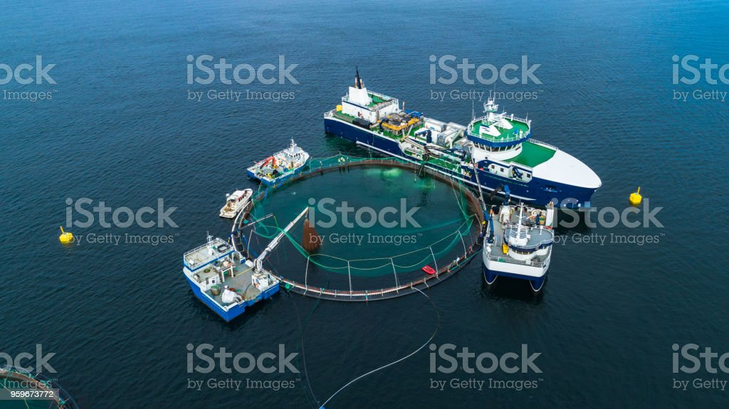 Salmon fish farm in fjord. Norway, Bergen. stock photo