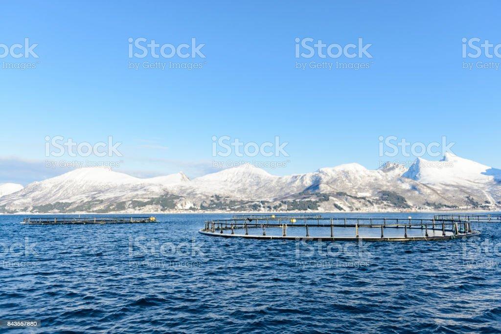 ノルウェー北部でセニヤ島で Bergsfjord のサーモンの養殖場 ストックフォト
