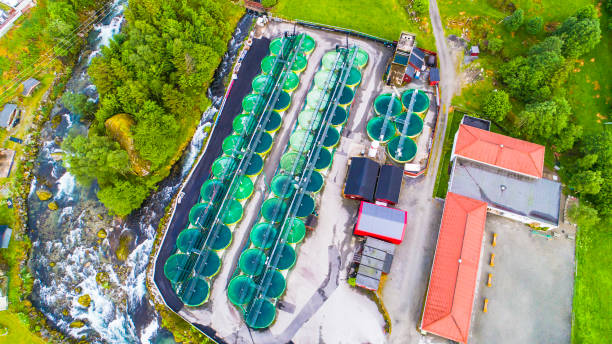 salmon fish farm. norway - aquaculture stock pictures, royalty-free photos & images