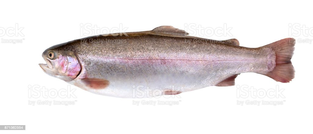 Salmon Fish Isolated On White Background Rainbow Trout Fresh Fish ...