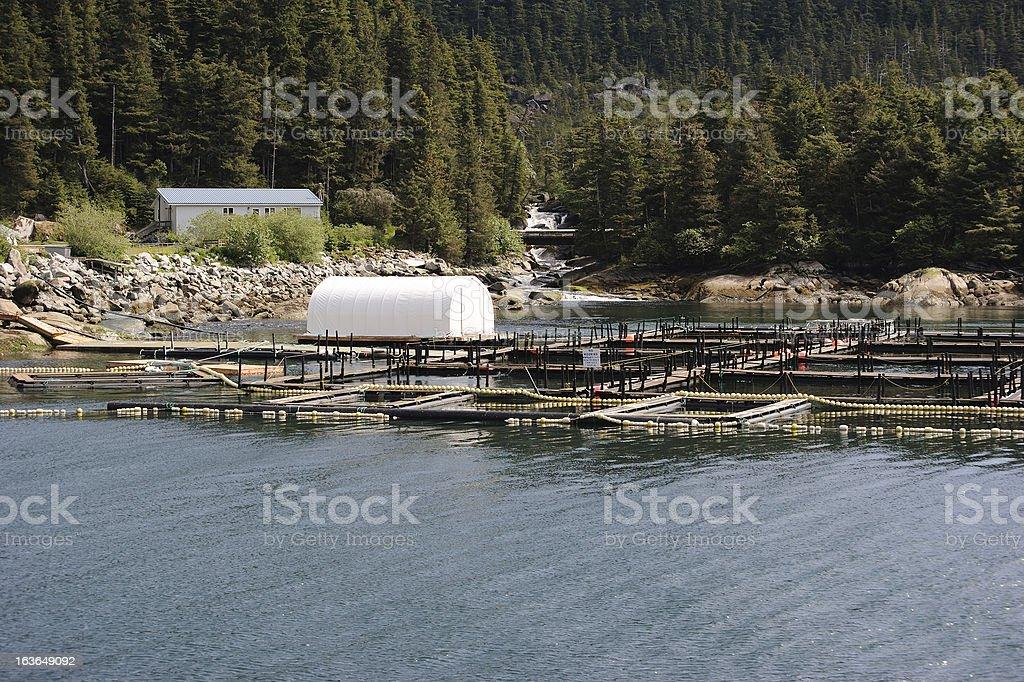 Salmon Hachery stock photo