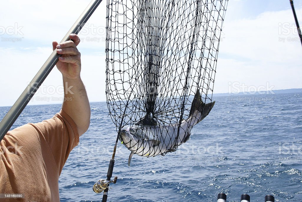 Salmon Netted stock photo