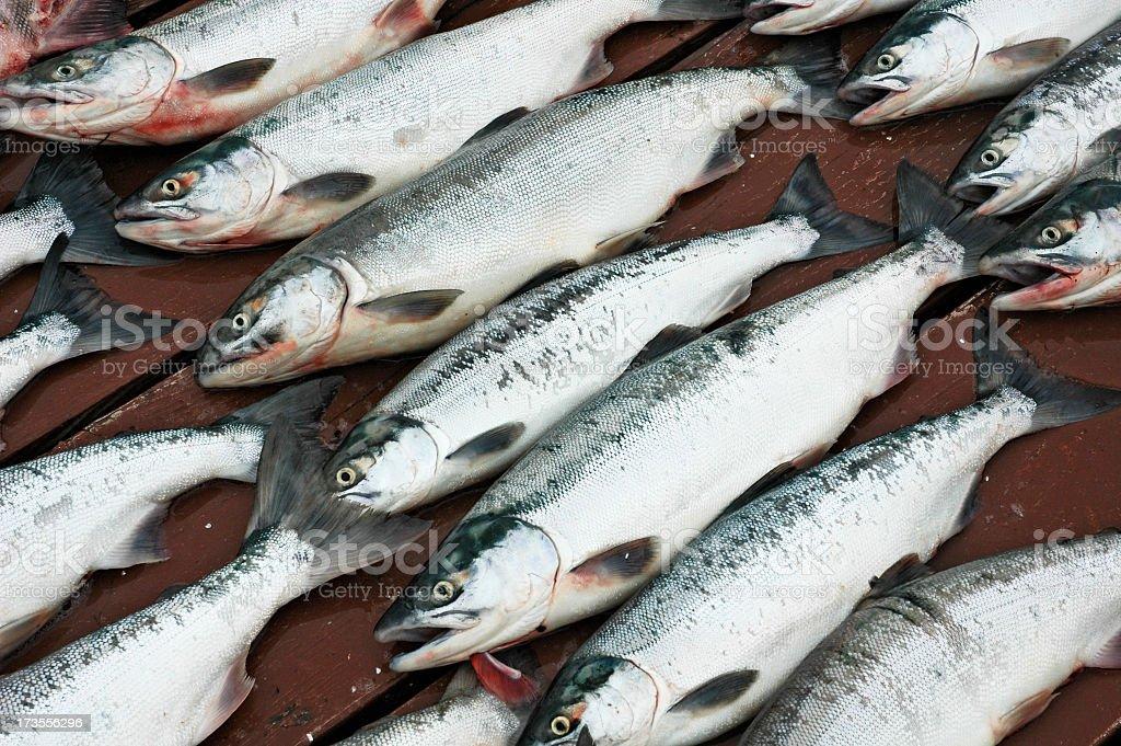 Salmon on a Dock stock photo