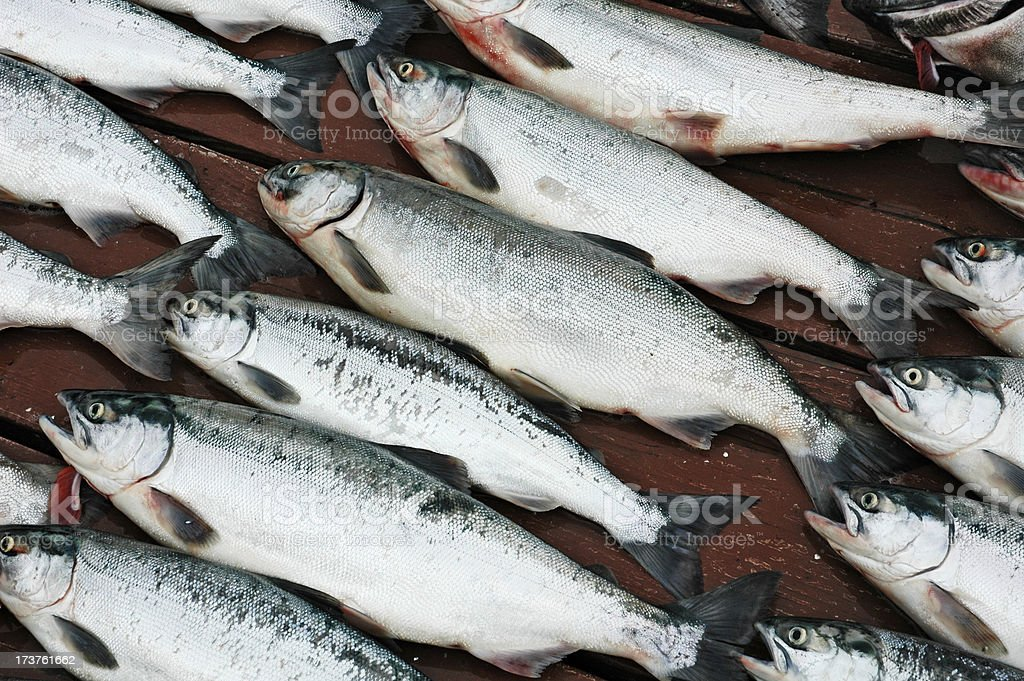 Salmon on a Dock stock photo