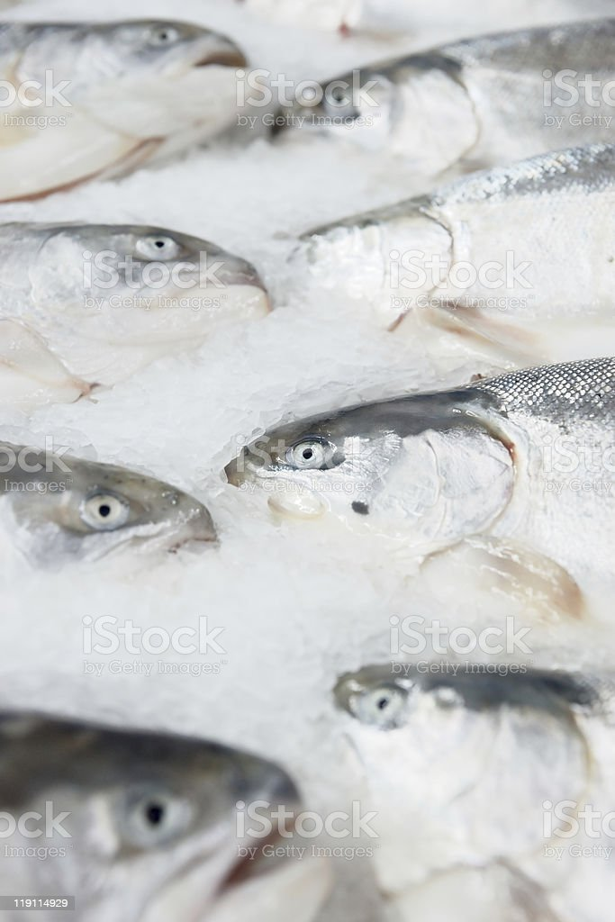 Salmon on cooled market display royalty-free stock photo