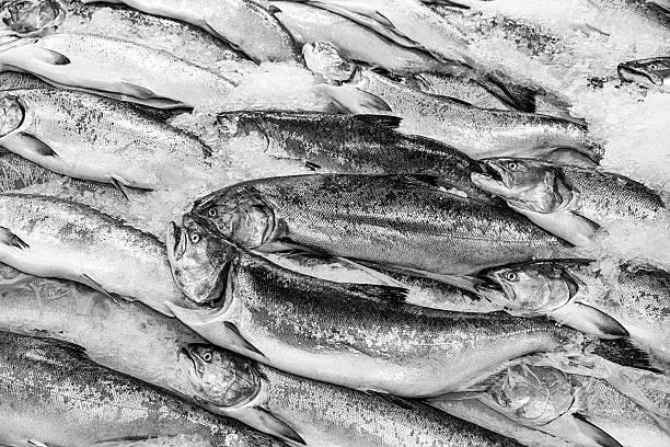 Lachs auf Eis – Foto