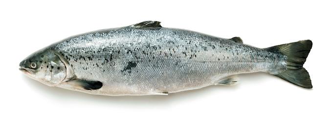 Whole salmon on white background