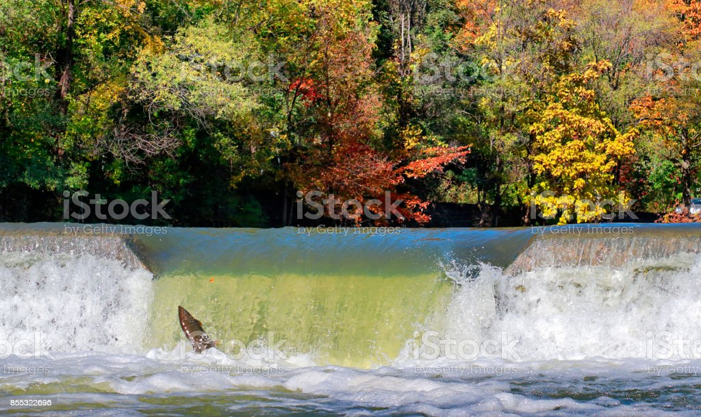 Salmon Run in Toronto stock photo