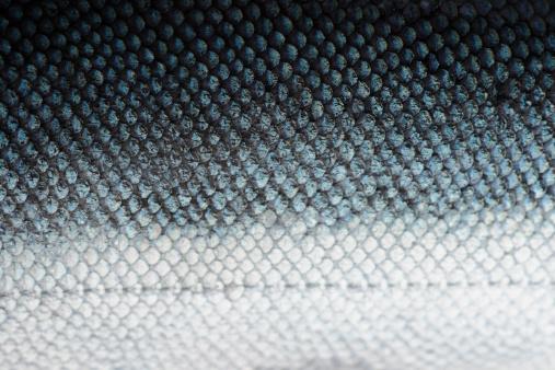 coho salmon scale close-up